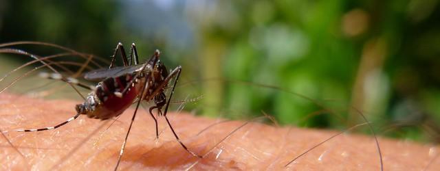 Farmacia_Colldeforn_mosquitos_picaduras