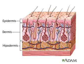 Capes de la pell